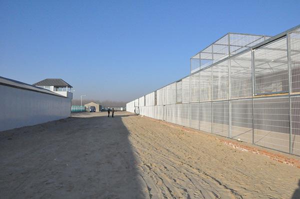 钢结构赛鸽公棚建设场地_公棚钢构建设|天翔鸽具